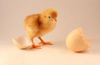 Chickens and Eggs - Ecclesiology and Soteriology image